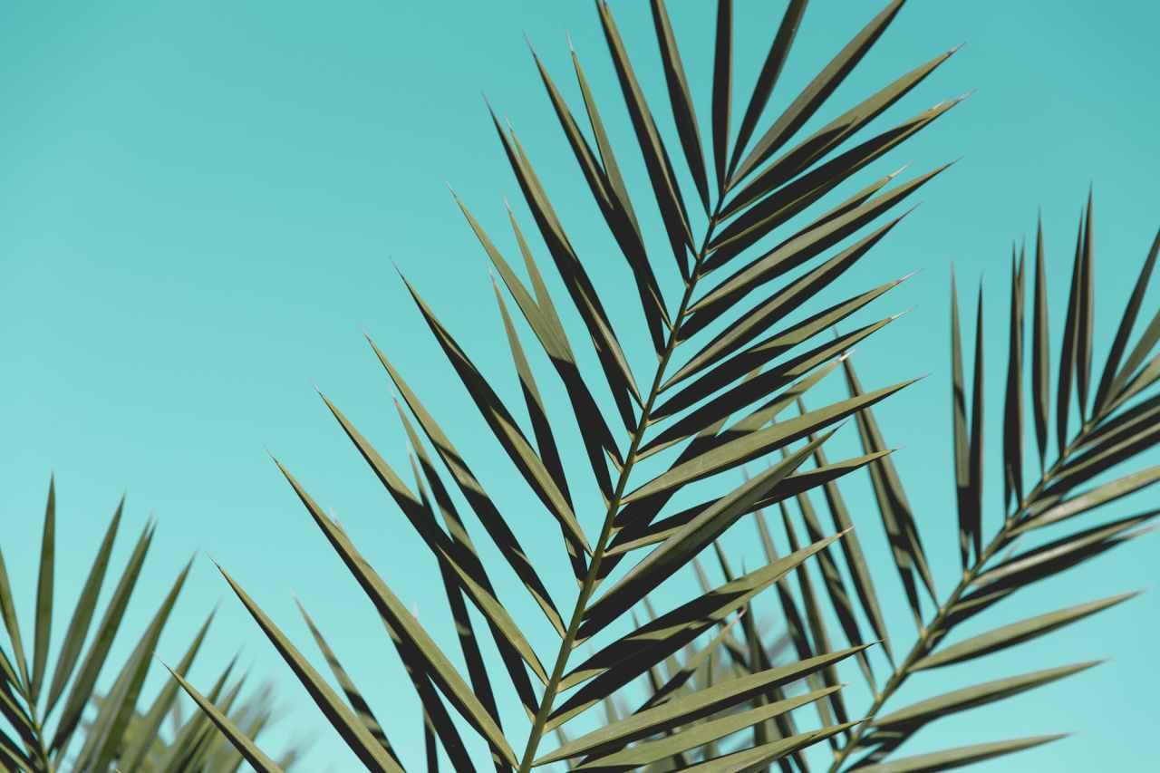 15 απλά βήματα για τους αρχάριους της οικολογικήςσυμπεριφοράς