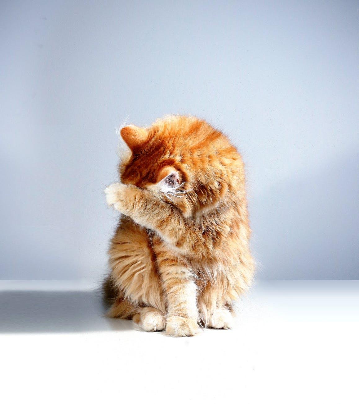 Έτσι θα αλλάξεις τη συνήθεια της γάτας σου να σε ξυπνάει τηνύχτα