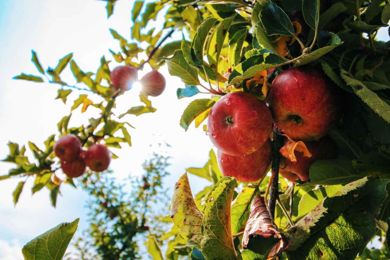 Μήλο, το χαρακτηριστικό φρούτο του φθινοπώρου είναι πολύ πιο χρήσιμο από ότινομίζετε