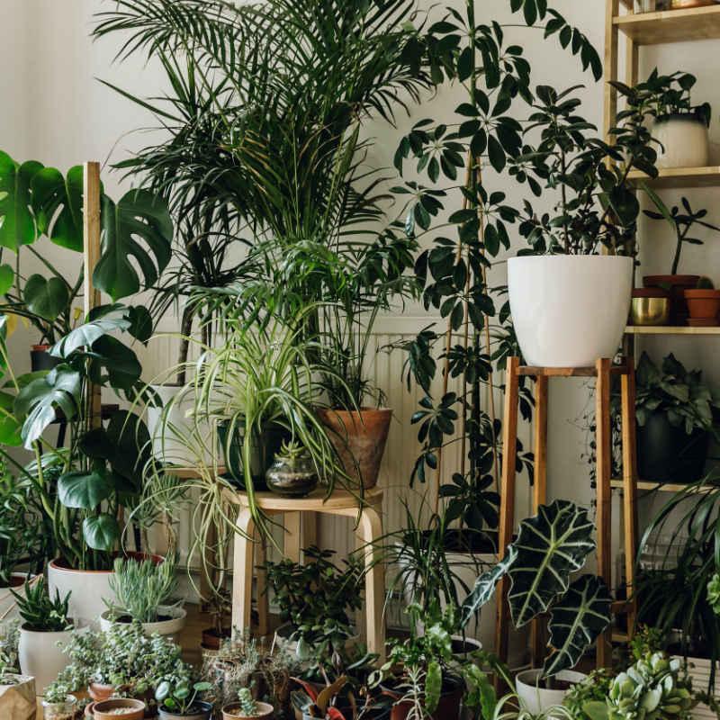 8 φυτά εσωτερικού χώρου που μπορούν να επιβιώσουν με λίγο φως καινερό!