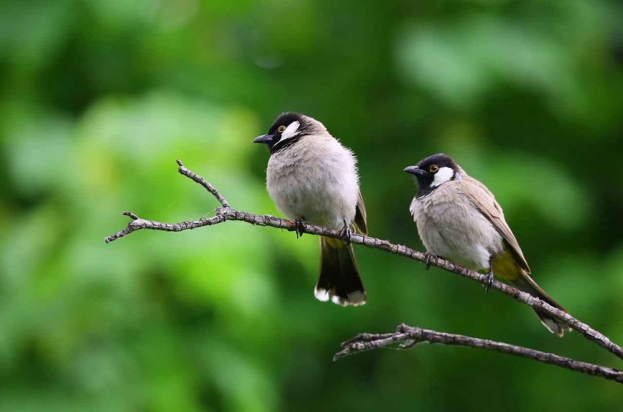 Πανευρωπαϊκή Γιορτή των Πουλιών(EuroBirdwatch)