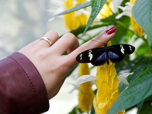 Πώς ένα μόνο χτύπημα των φτερών μιας πεταλούδας μπορεί να επηρεάσει τη ζωή σου και τον τρόπο σκέψηςσου