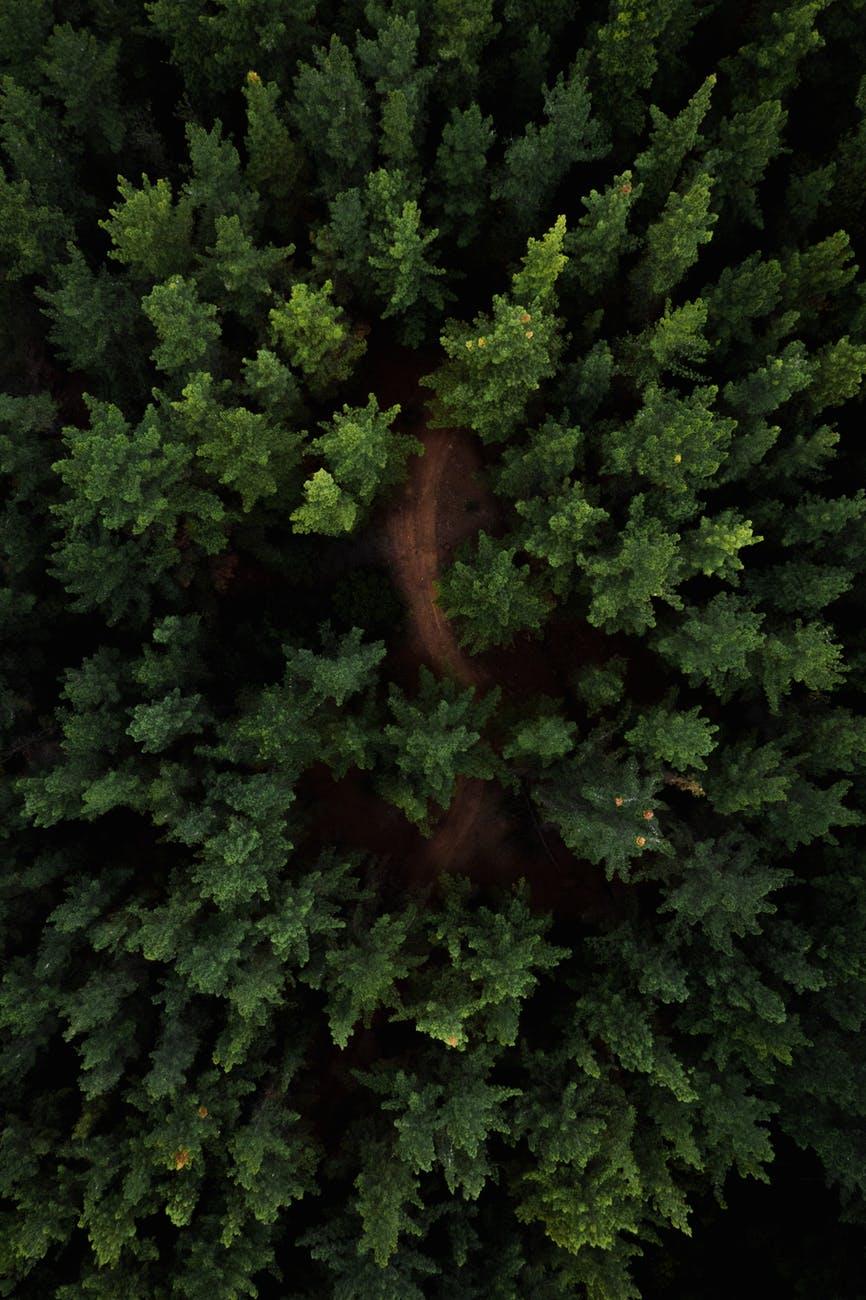 Στην Αίγυπτο φτιάχνουν δάση στηνέρημο