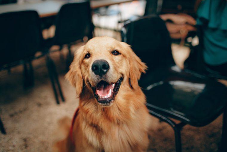 Τα tips που θα κάνουν το βούρτσισμα των δοντιών του σκύλου σουπαιχνιδάκι