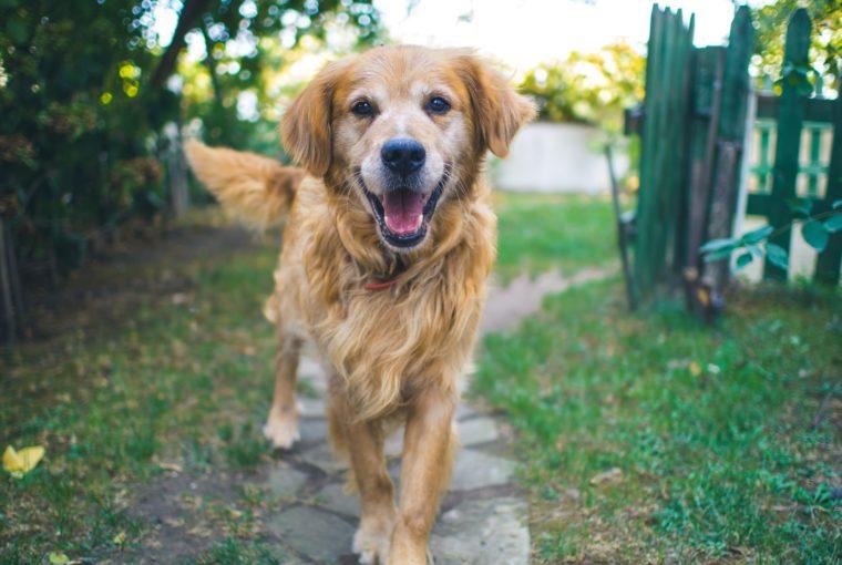 Ο σκύλος σου έχει ξηροδερμία; Τι φταίει και τι μπορείς να κάνεις για να το αντιμετωπίσεις με φυσικότρόπο;