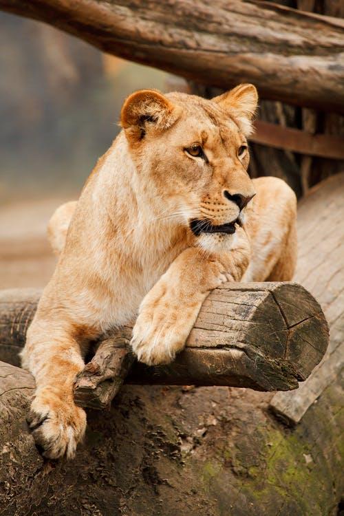 Ένα τεράστιο πάρκο στην Αφρική θέλει να σώσει όλη την άγρια ζωή τουπλανήτη