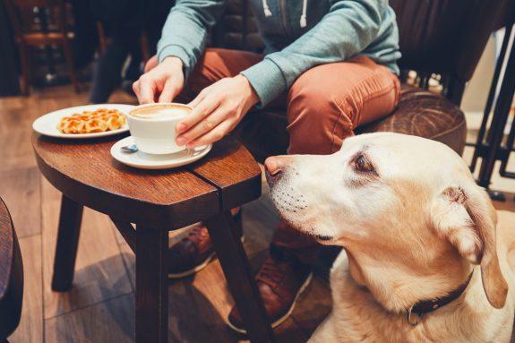 Η Σαουδική Αραβία αποκτά το πρώτο pet – friendlycafe