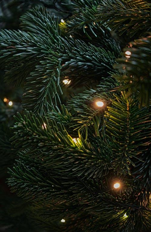Το trend στα χριστουγεννιάτικα δέντρα που κάνει φέτος δυναμικό comeback -Το βλέπουμε ήδη στα πιο stylishσπίτια