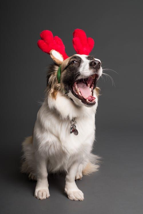 Κι εσύ έχεις την περιέργεια να ακούσεις το πρώτο χριστουγεννιάτικο τραγούδι γιασκύλους!