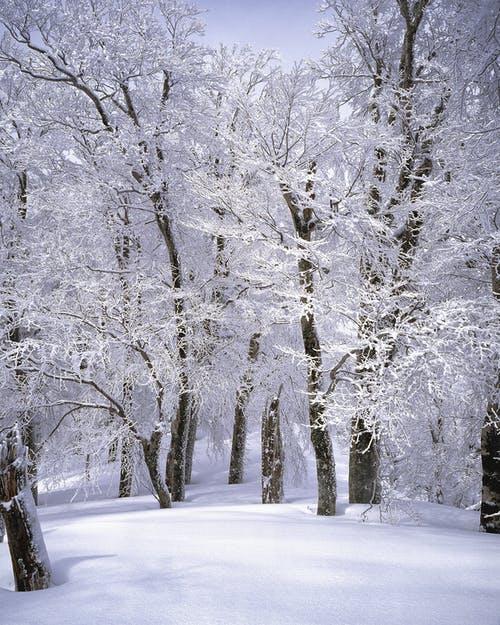 Καιρός σήμερα: Ο χειμώνας στα καλύτερά του – Λευκό πέπλο καλύπτει τηνΕλλάδα