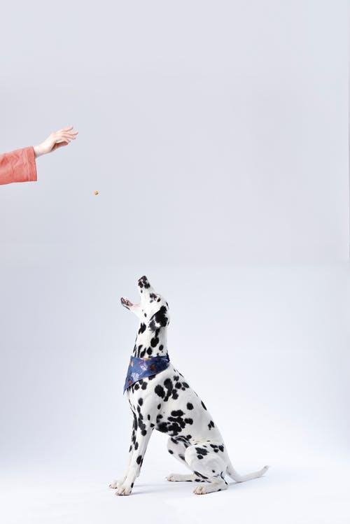 """Αυτή είναι η εξήγηση για τις """"περίεργες"""" κινήσεις του σκύλου σου που δενκαταλαβαίνεις"""