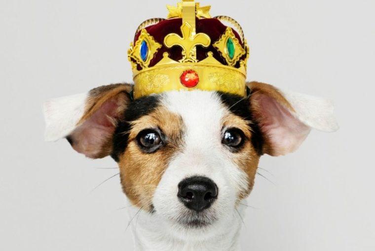 Μπορείς να αφήσεις την περιουσία στον σκύλοσου;